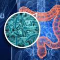 Microbiote intestinal et réduction pondérale