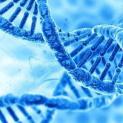 Facteurs génétiques et diabète de type 2